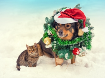 Dog wearing christmas wreath and santa hat sitting with kitten o